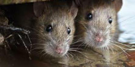 отрава крысиная смерть отзывы