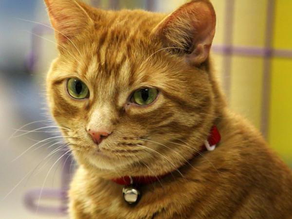 отрастут ли у кота усы если обрезать