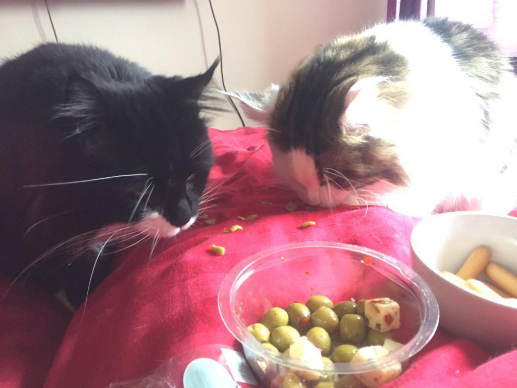 почему коты любят оливки и маслины