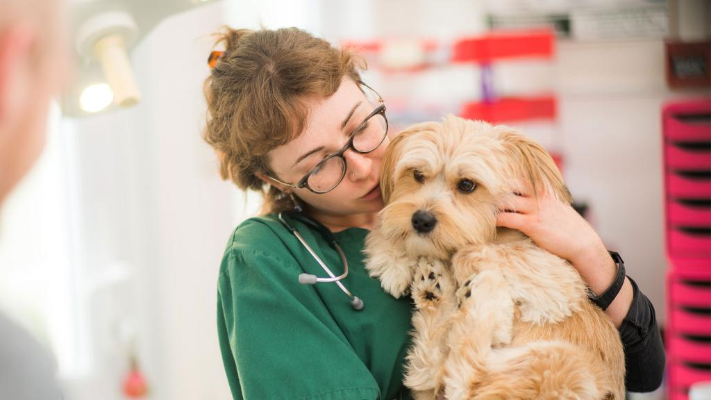 Поведение собаки после стерилизации: изменение характера, уход за собакой после стерилизации, плюсы и минусы стерилизации собак