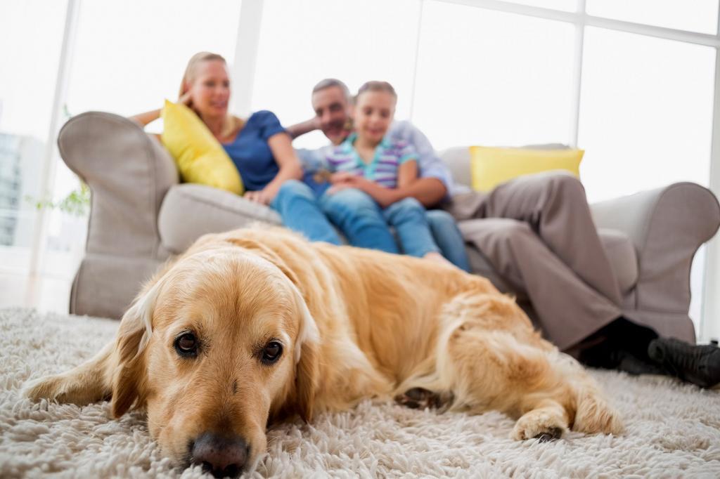 Метеоризм у собаки: причины, лечение, диета, профилактика