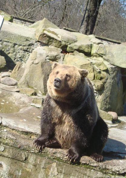 Зоопарк Калининград режим работы