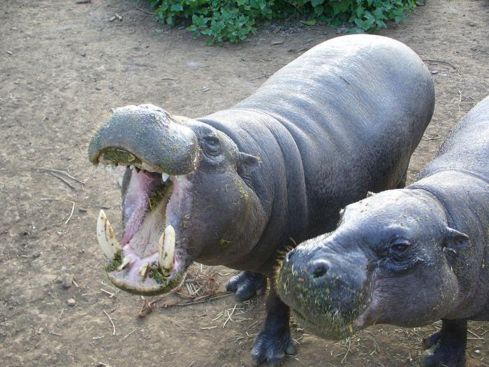 Калининградский зоопарк цена билета