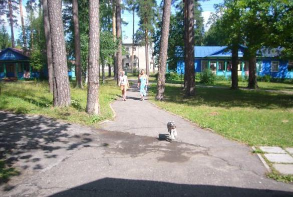 Санаторий Белое озеро Ульяновская область