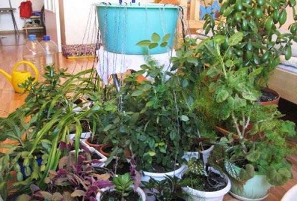 Полив домашних растений во время отпуска своими руками фото 821