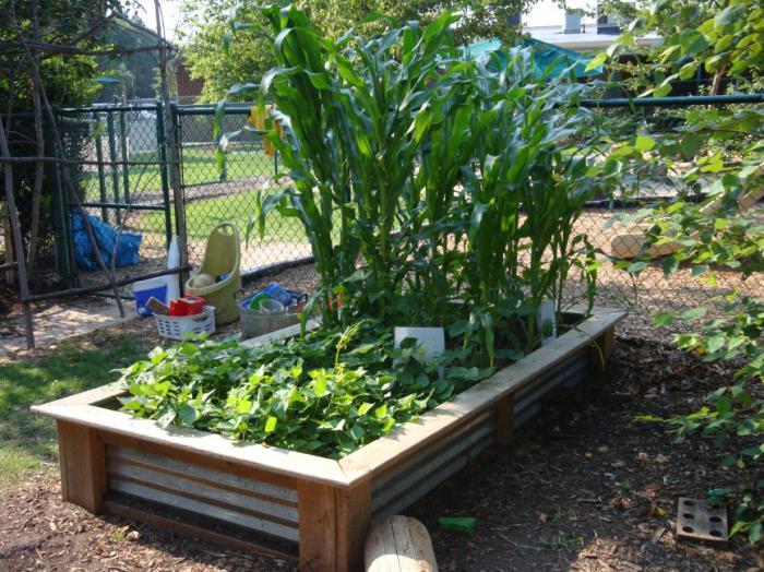 совместимость посадки свеклы с другими овощами