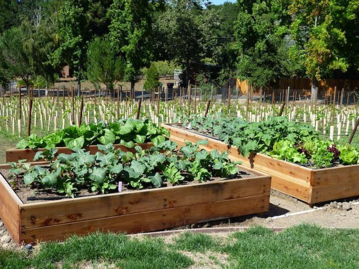 совместимость посадки овощей в огороде