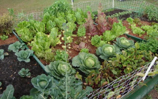 совместимость посадки овощей в теплице