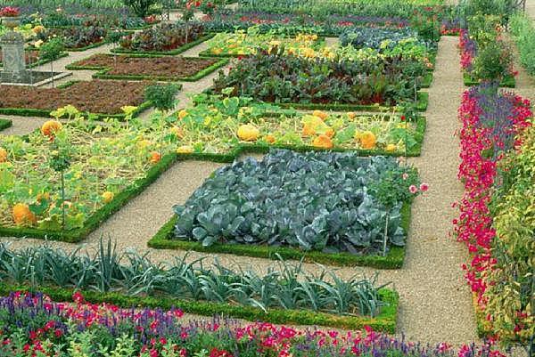 совместимость овощей при посадке