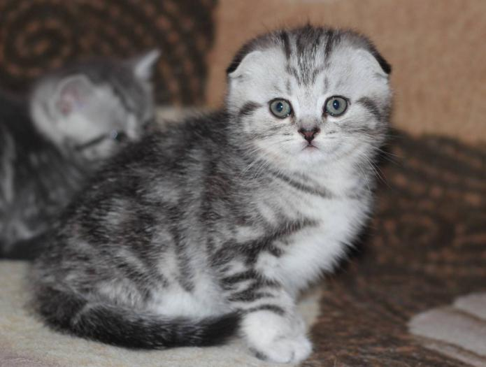 Чем кормить котенка 2 месяца домашняя еда