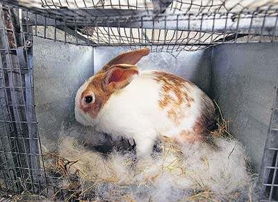 Разведение кроликов зимой