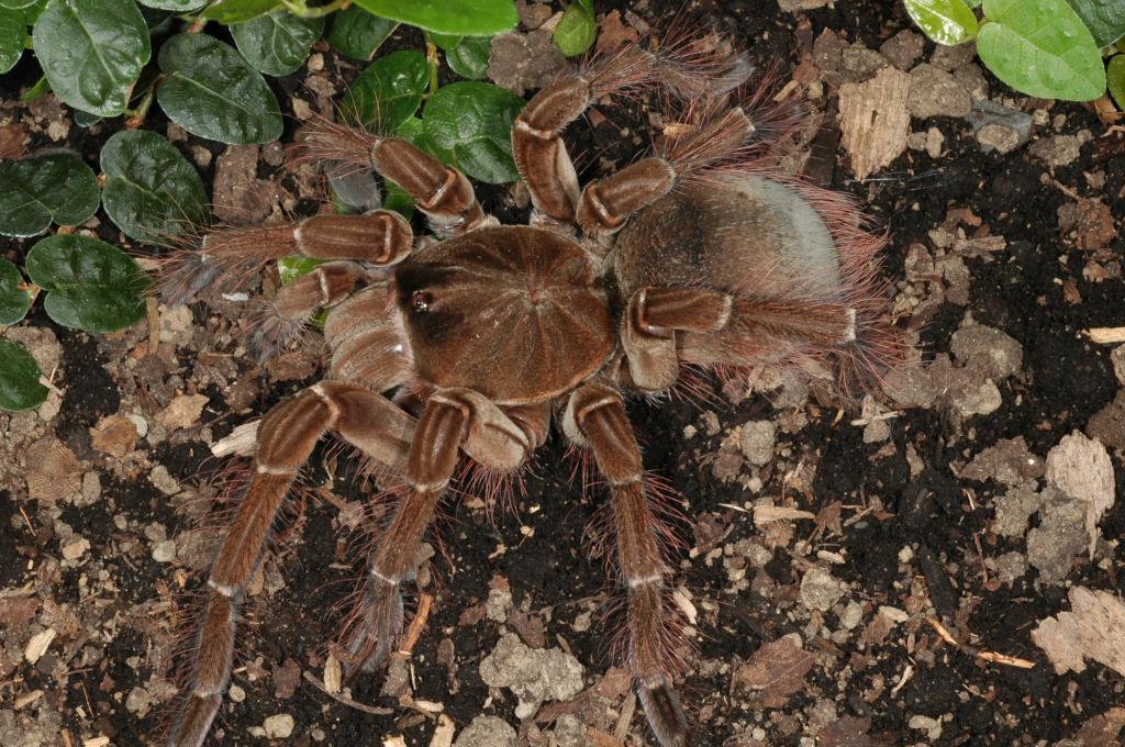 все пауки мира фото