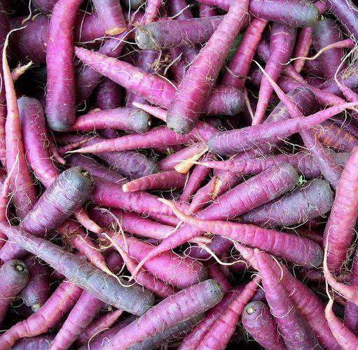 Морковь какого цвета была изначально