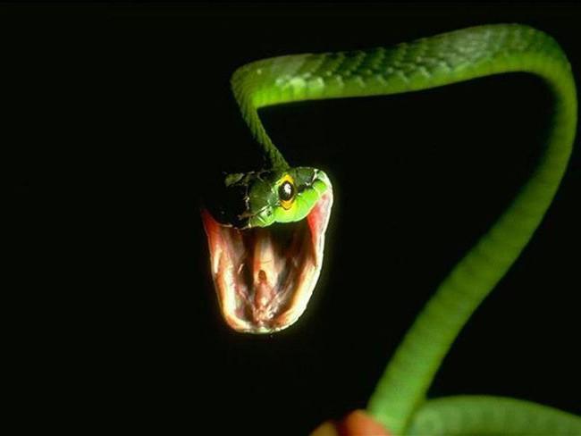 Правда о змеях
