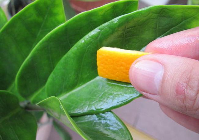 Применение апельсиновых корок в огороде