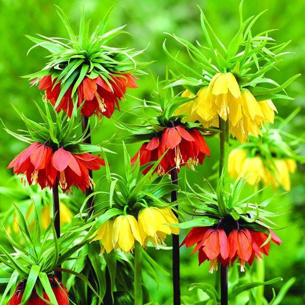 Цветы и уход