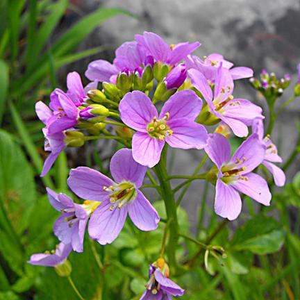 весной какие первые цветы