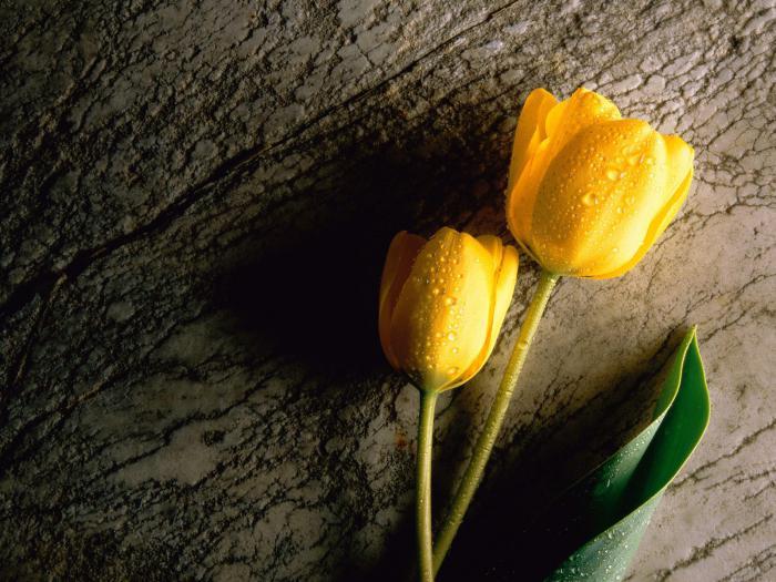 какие первые цветы расцветают весной