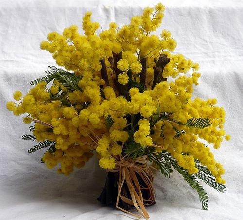 самые первые цветы весной
