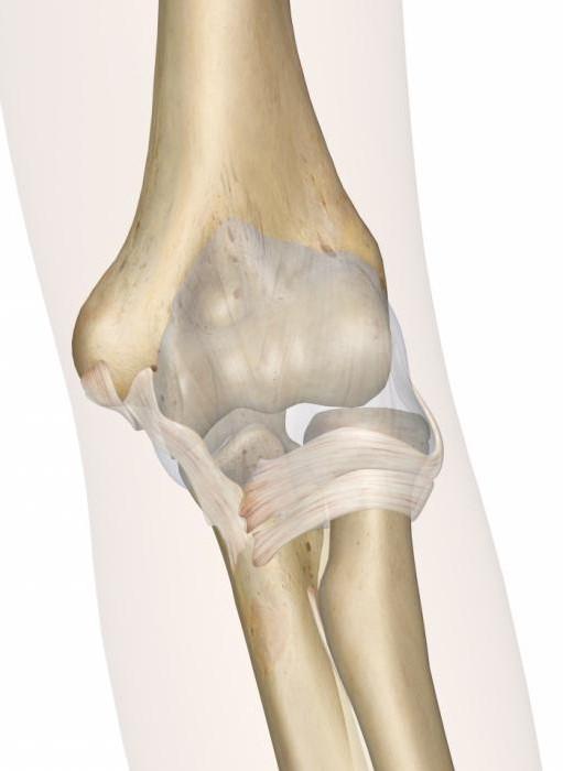 Локтевой сустав анатомия