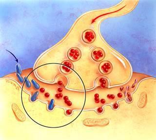 ингибиторы холинэстеразы классификация