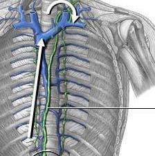 проток грудной лимфатический
