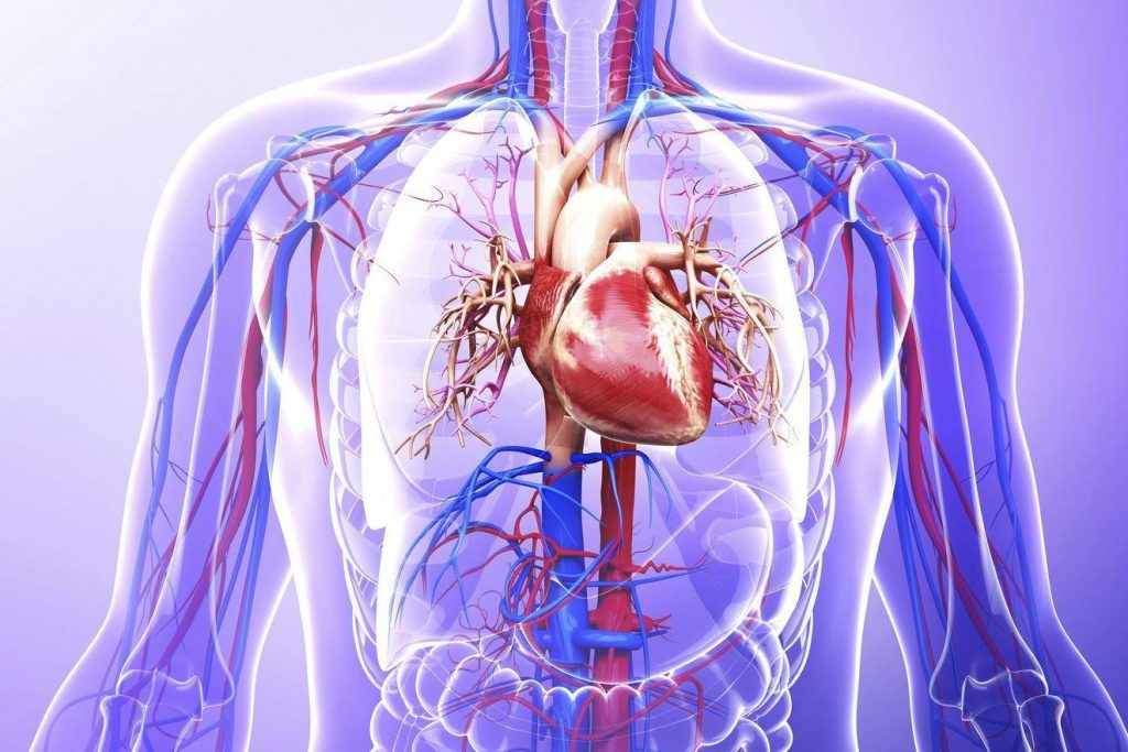 Обострение ВСД (вегетососудистой дистонии): причины, симптомы и лечение