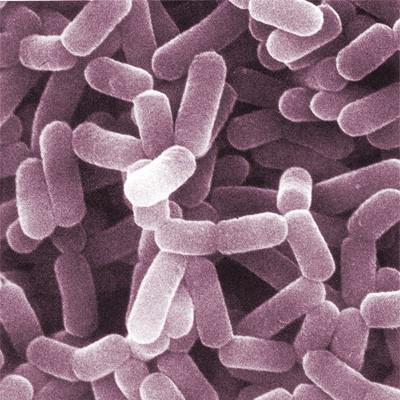 Норма лактобактерий в цервикальном канале
