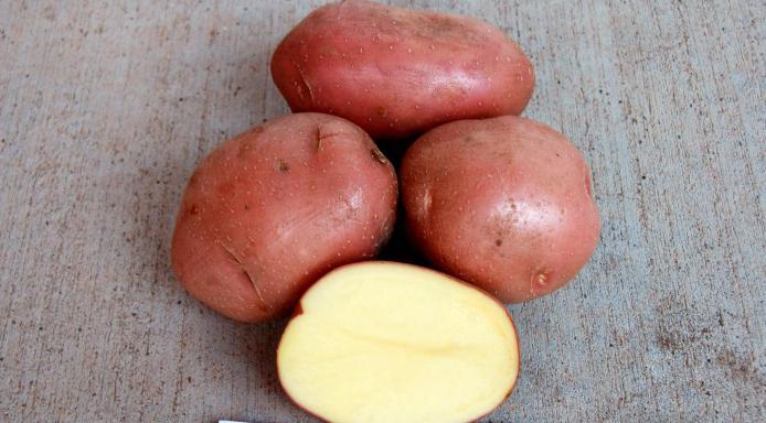 Картофель белая роза описание сорта