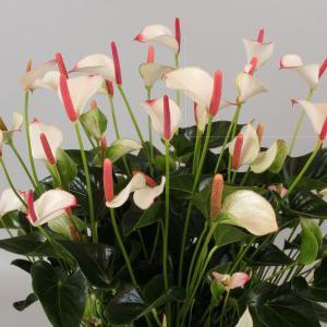 екзотичні квіти