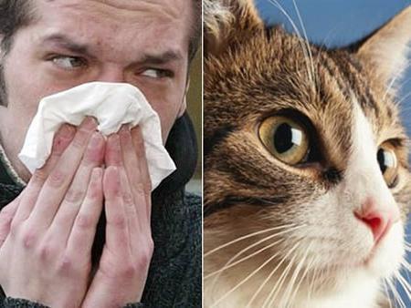 аллергия на кошку как проявляется