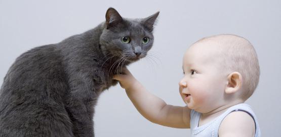 аллергия у грудничка на кошку