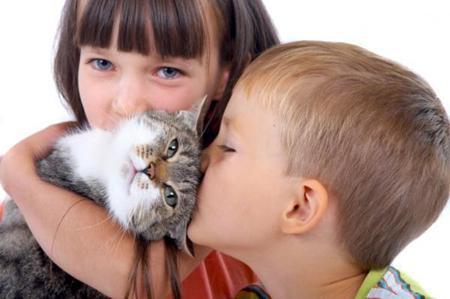 аллергия на кошку что делать