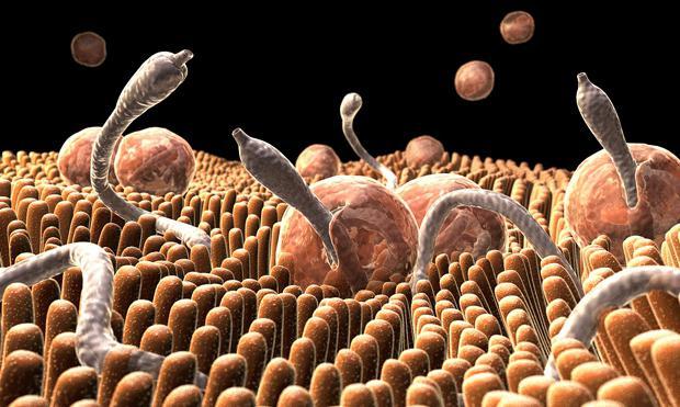 черви в организме человека