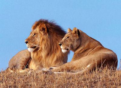20 августа - знак зодиака Лев. Характеристика и совместимость
