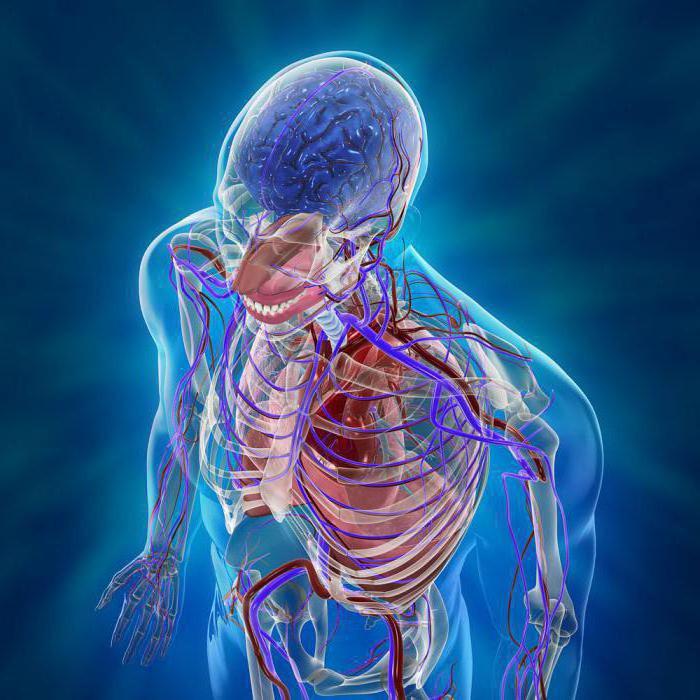 Общий обзор организма человека: системы, строение и функции. Как устроен человек