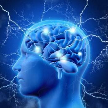 отделы мозга и их функции таблица