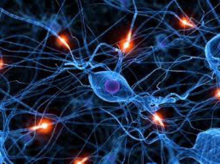 синапс это