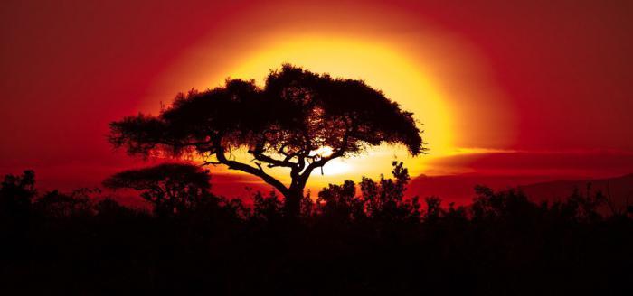 Килиманджаро высота горы