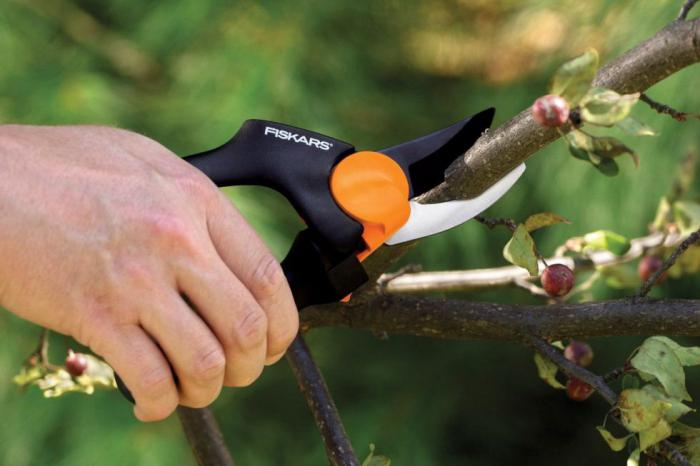 как выбрать секатор для обрезки деревьев
