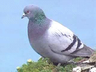 Значение имени Тамила - нежность горной голубки