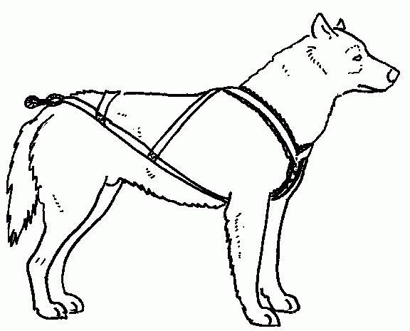 шлейка для собаки выкройка