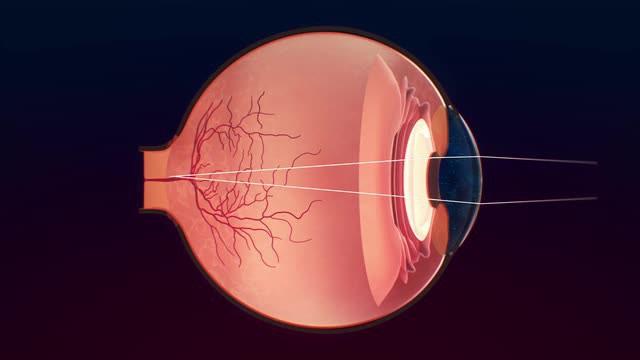 аппарат глаза вспомогательный