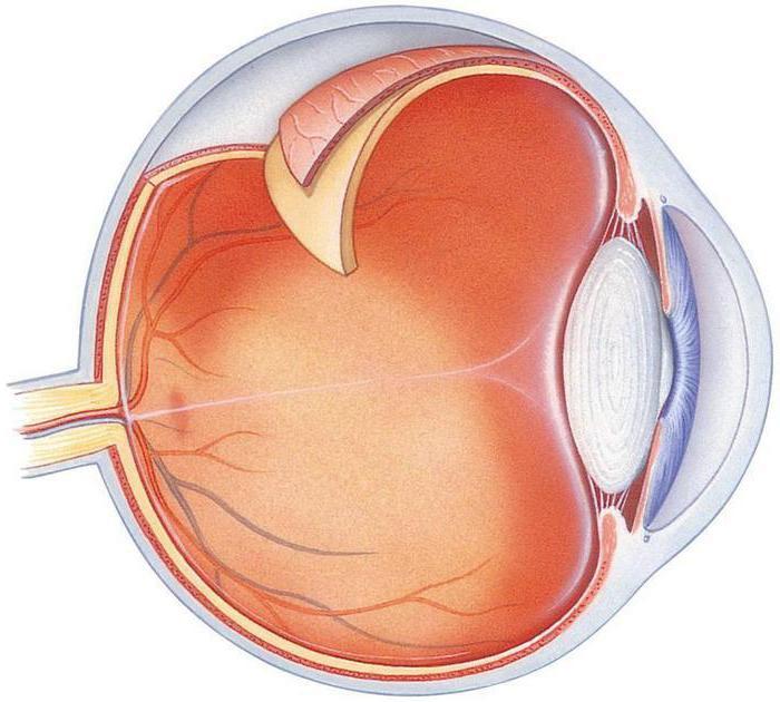 что относится к вспомогательному аппарату глаза