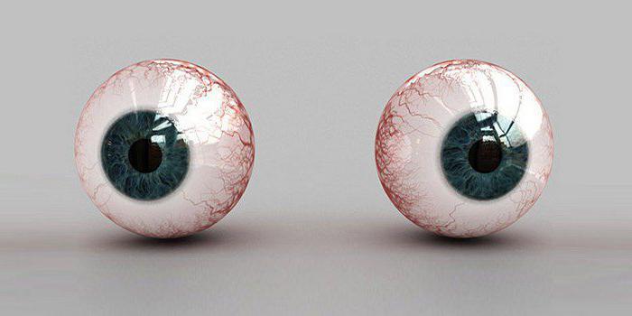 вспомогательный аппарат глаза состоит из