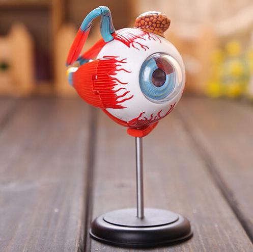 строение глаза вспомогательный аппарат