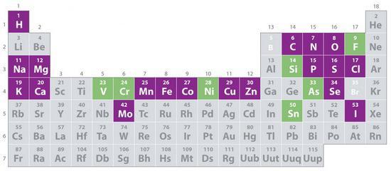 микроэлементы в организме человека таблица
