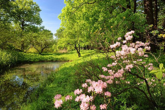 ботанический сад сакура