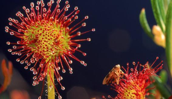 что такое цветок растения