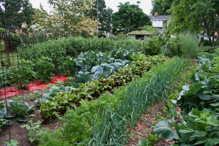 севооборот овощных культур на огороде